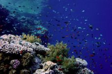 2005 Red Sea 010